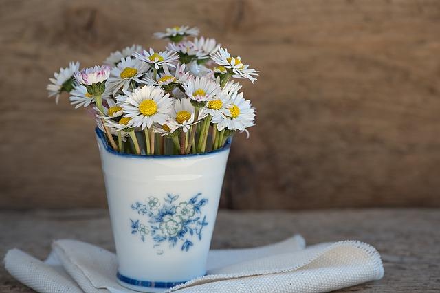 sedmikrásky v květináči