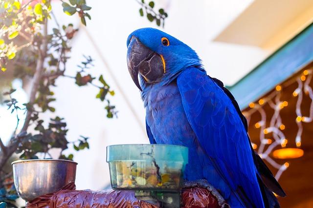 papoušek na krmítku
