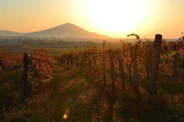 západ slunce ve vinici